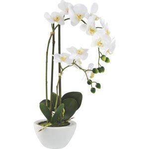 Rostlina Umělá Marie