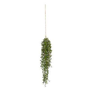 Rostlina Umělá Senecio