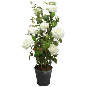 Růže Rosenstock